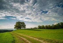 Nachhaltigkeit / Pixabay