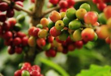 Kaffeebohnen / Pixabay
